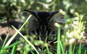 Обои Котёнок за травкой: Котёнок, Травка, Кошки
