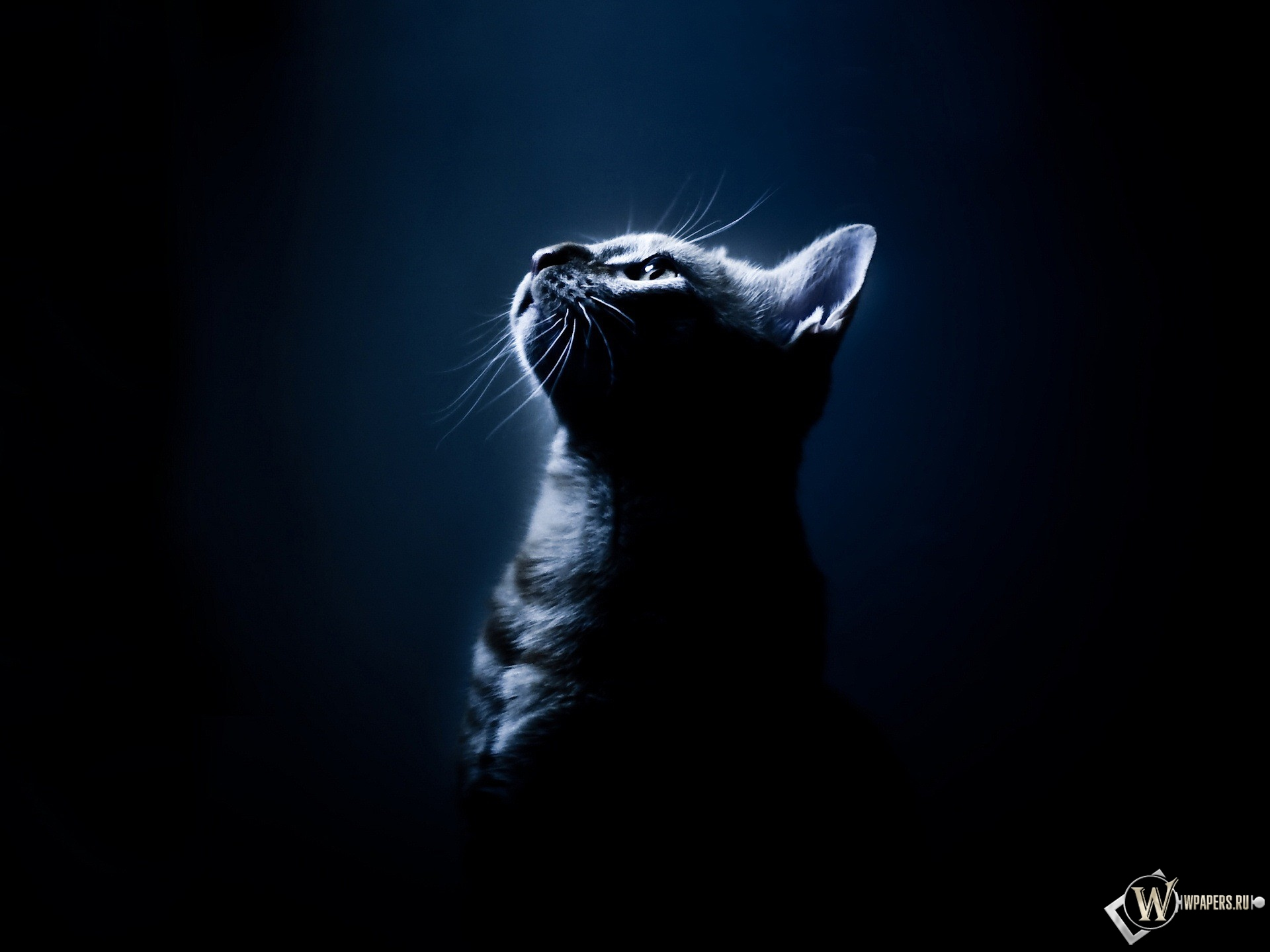 Котёнок в темноте 1920x1440