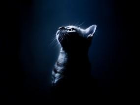 Обои Котёнок в темноте: Свет, Темнота, Ночь, Котёнок, Кошки
