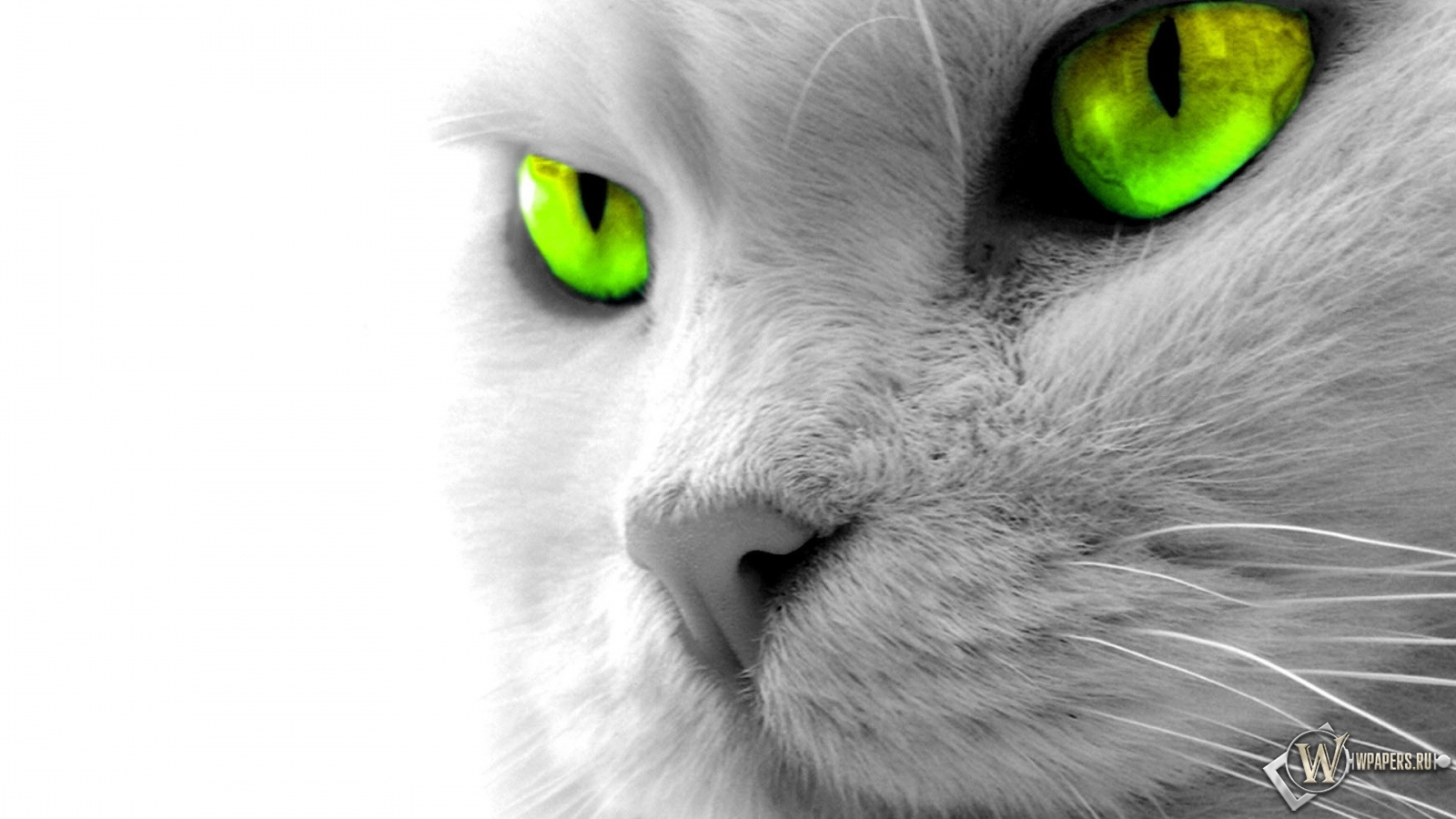 http://wpapers.ru/wallpapers/animals/Cats/8593/1600x900_%D0%9A%D0%BE%D1%88%D0%BA%D0%B8%D0%BD%D1%8B-%D0%B7%D0%B5%D0%BB%D0%B5%D0%BD%D1%8B%D0%B5-%D0%B3%D0%BB%D0%B0%D0%B7%D0%B0.jpg