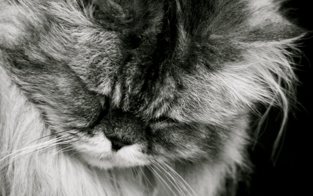http://wpapers.ru/wallpapers/animals/Cats/8595/PREV_%D0%A1%D0%BC%D1%83%D1%89%D0%B5%D0%BD%D0%BD%D1%8B%D0%B9-%D0%BA%D0%BE%D1%82.jpg