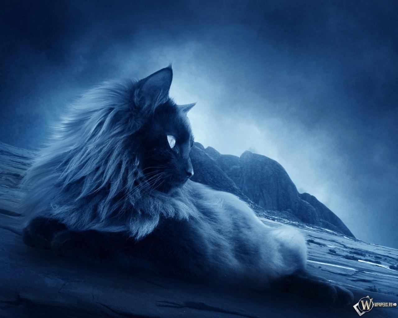 Обои ночной кот ночь сумерки кот