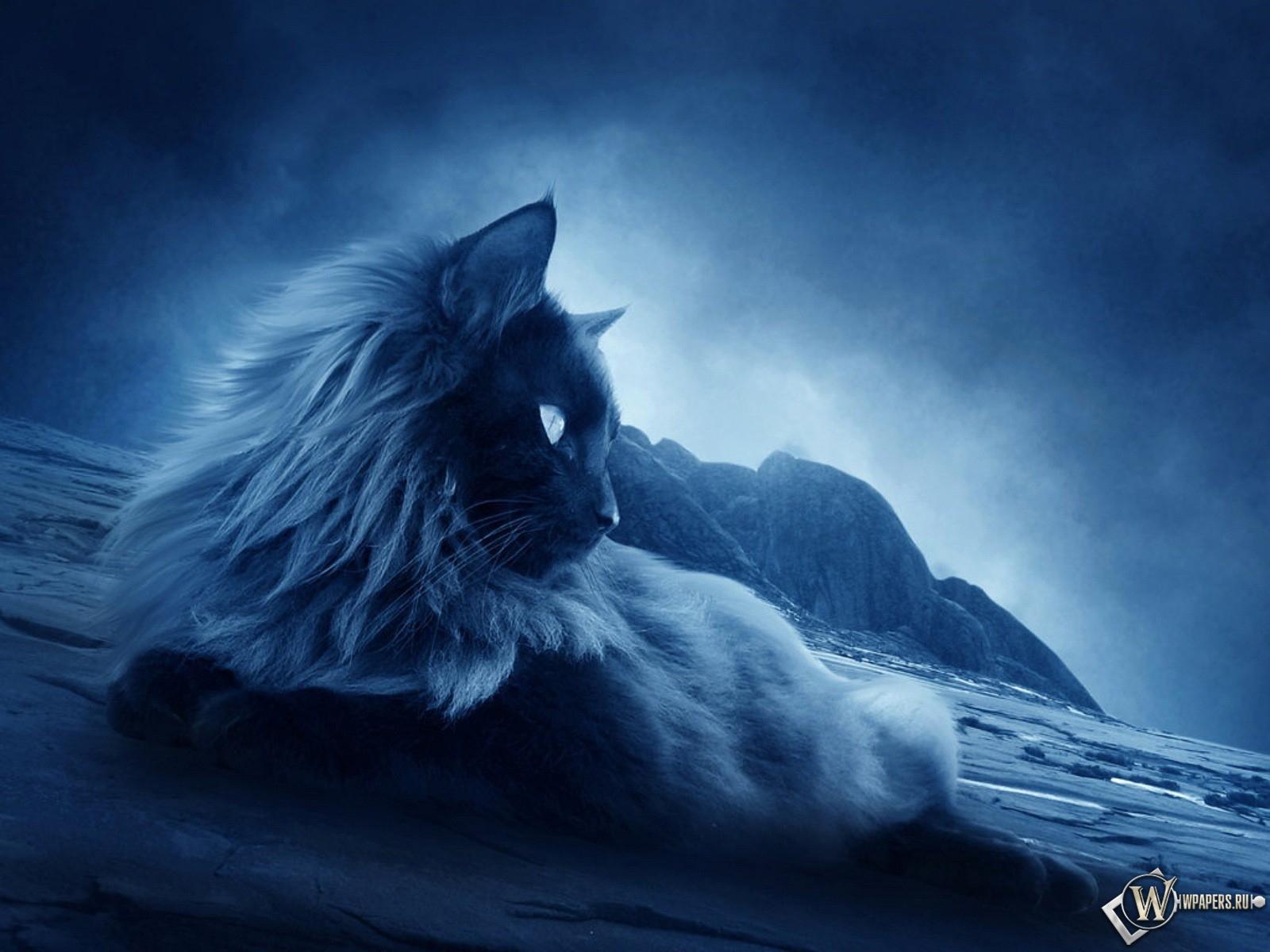 Ночной кот 1600x1200