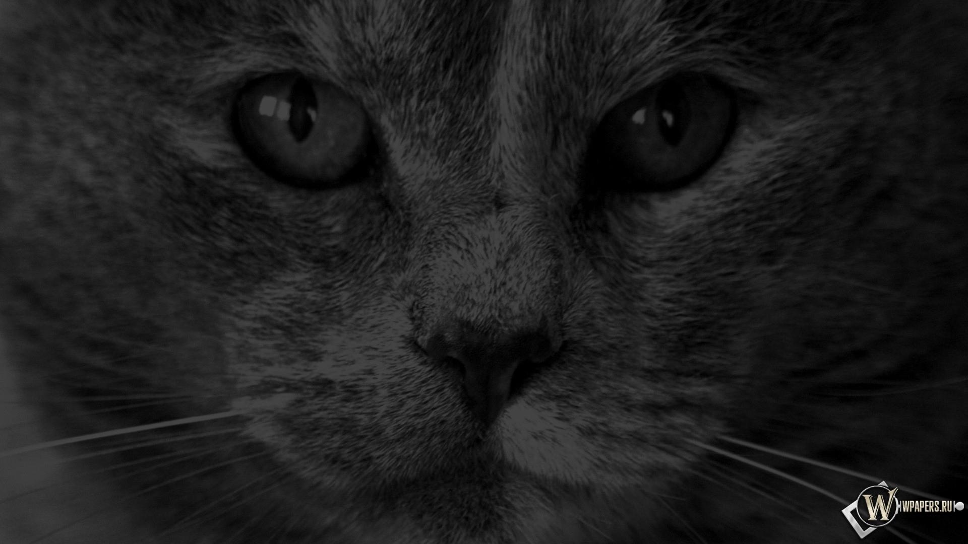 кот в темноте 1920x1080