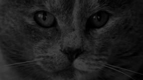 Обои кот в темноте: Темнота, Кот, Кошки