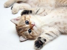 Обои Котята: Котята, Кошки
