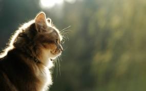 Обои Кот: Свет, Усы, Шерсть, Кошки