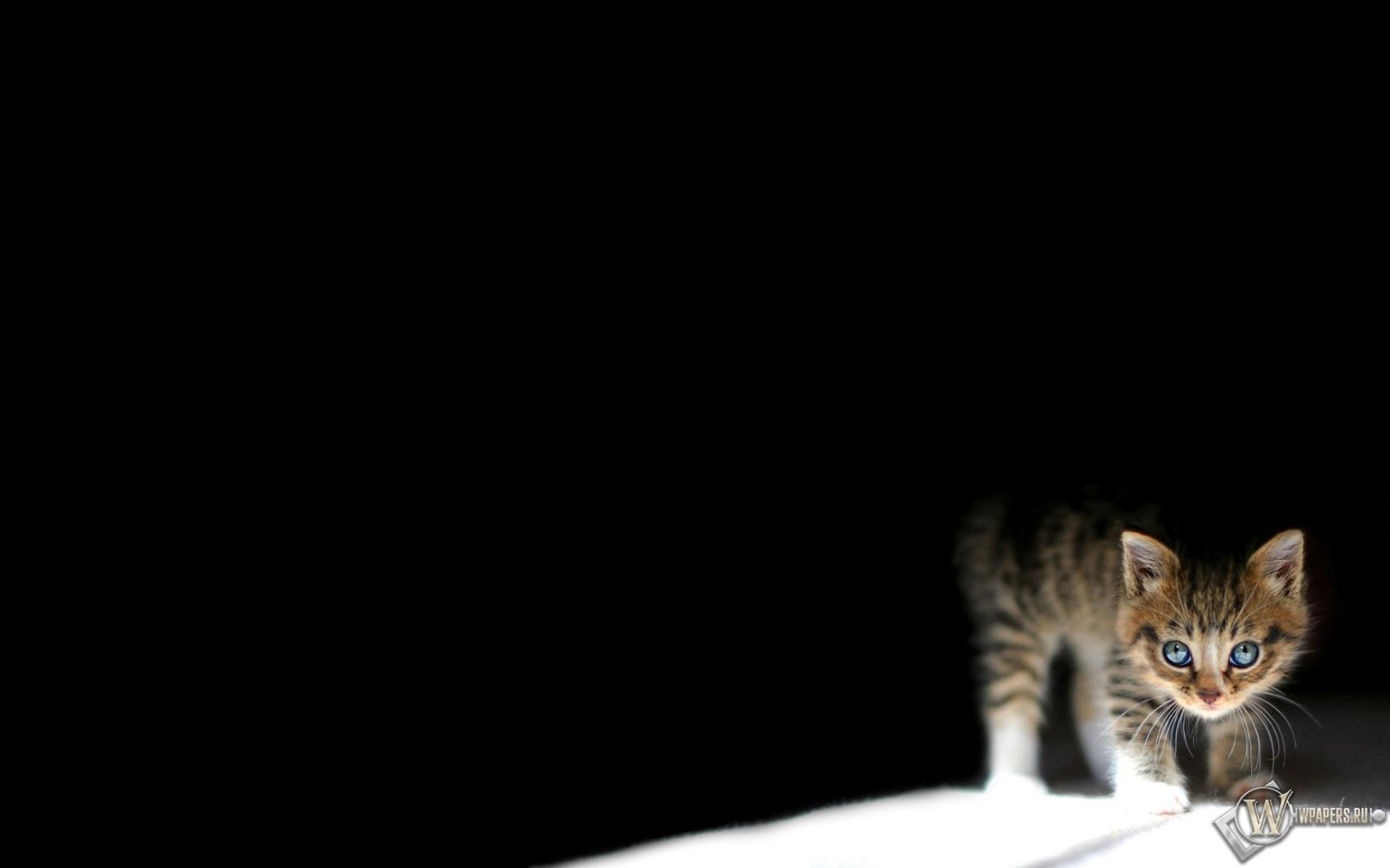 Обои котёнок свет котёнок чёрный