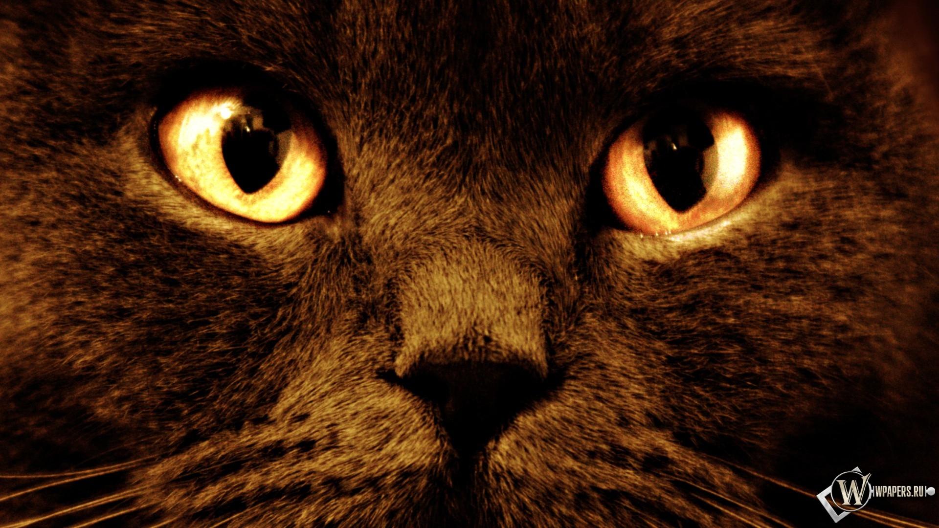 Черный кот с оранжевыми глазами 1920x1080