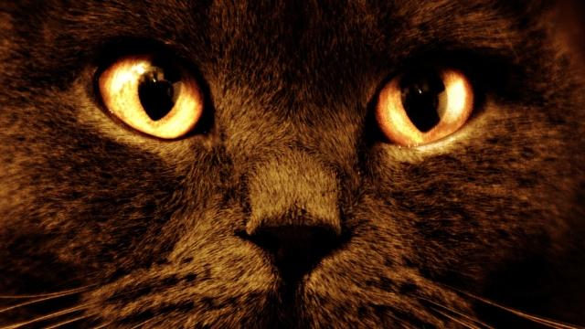 Черный кот с оранжевыми глазами