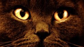 Обои Черный кот с оранжевыми глазами: Глаза, Кот, Морда, Оранжевый, Кошки