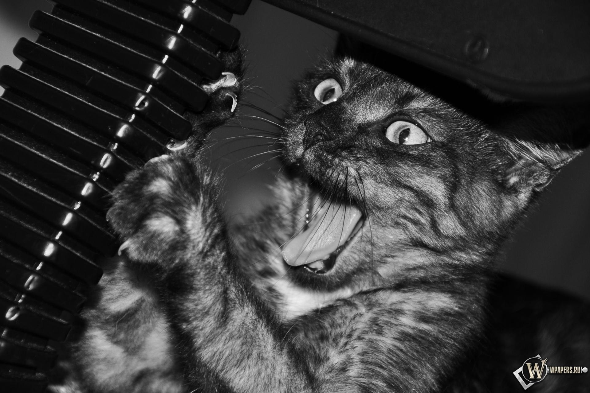 Котик точит когти 1920x1280