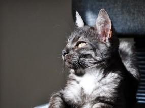 Обои Котик: Свет, Взгляд, Кот, Кошки