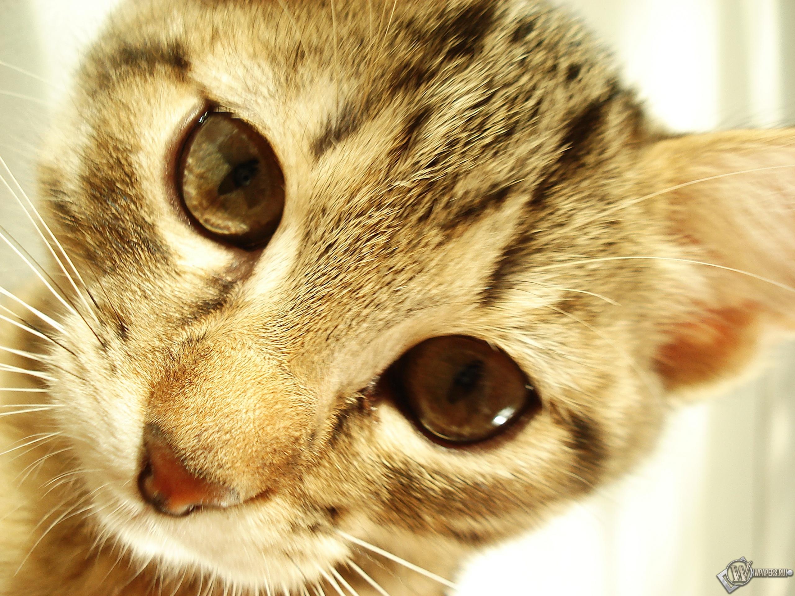 Полосатый котик 2560x1920
