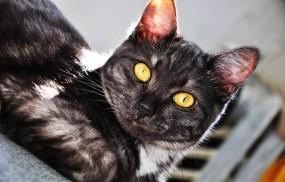 Обои Котик: Глаза, Взгляд, Котик, Кошки