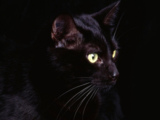 Чёрная кошка
