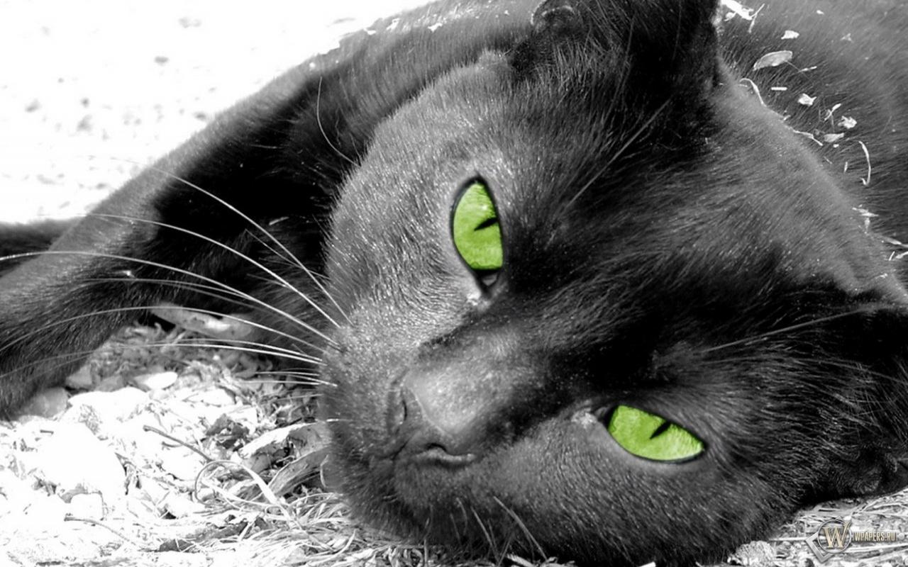 Обои портрет Кошка зеленые глаза морда кот Скачать