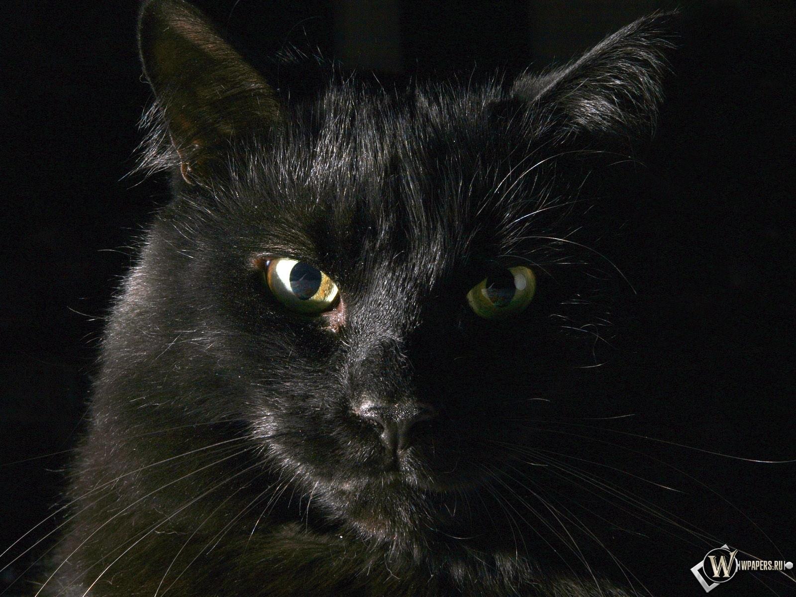 Чёрный кот 1600x1200