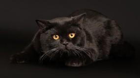 Обои Черный кот играет: Чёрный кот, Кошки