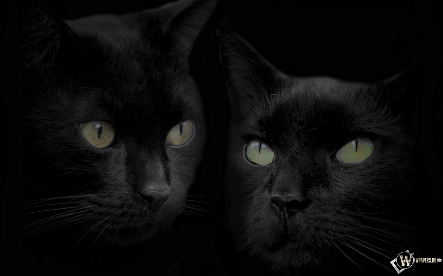 скачать черные обои: