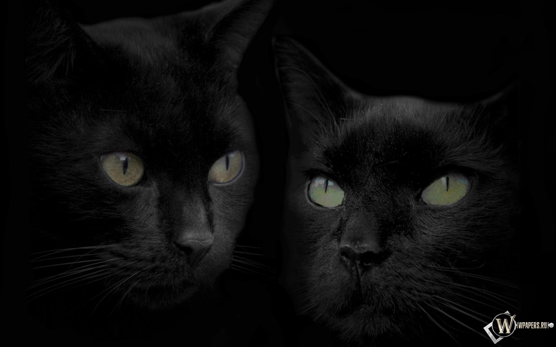 Обои черные кошки чёрный кошки коты