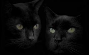 Обои Черные кошки: Чёрный, Кошки, Коты, Кошки