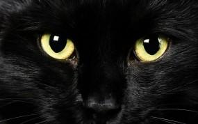 Обои Black Cat: Глаза, Морда, Чёрная кошка, Кошки