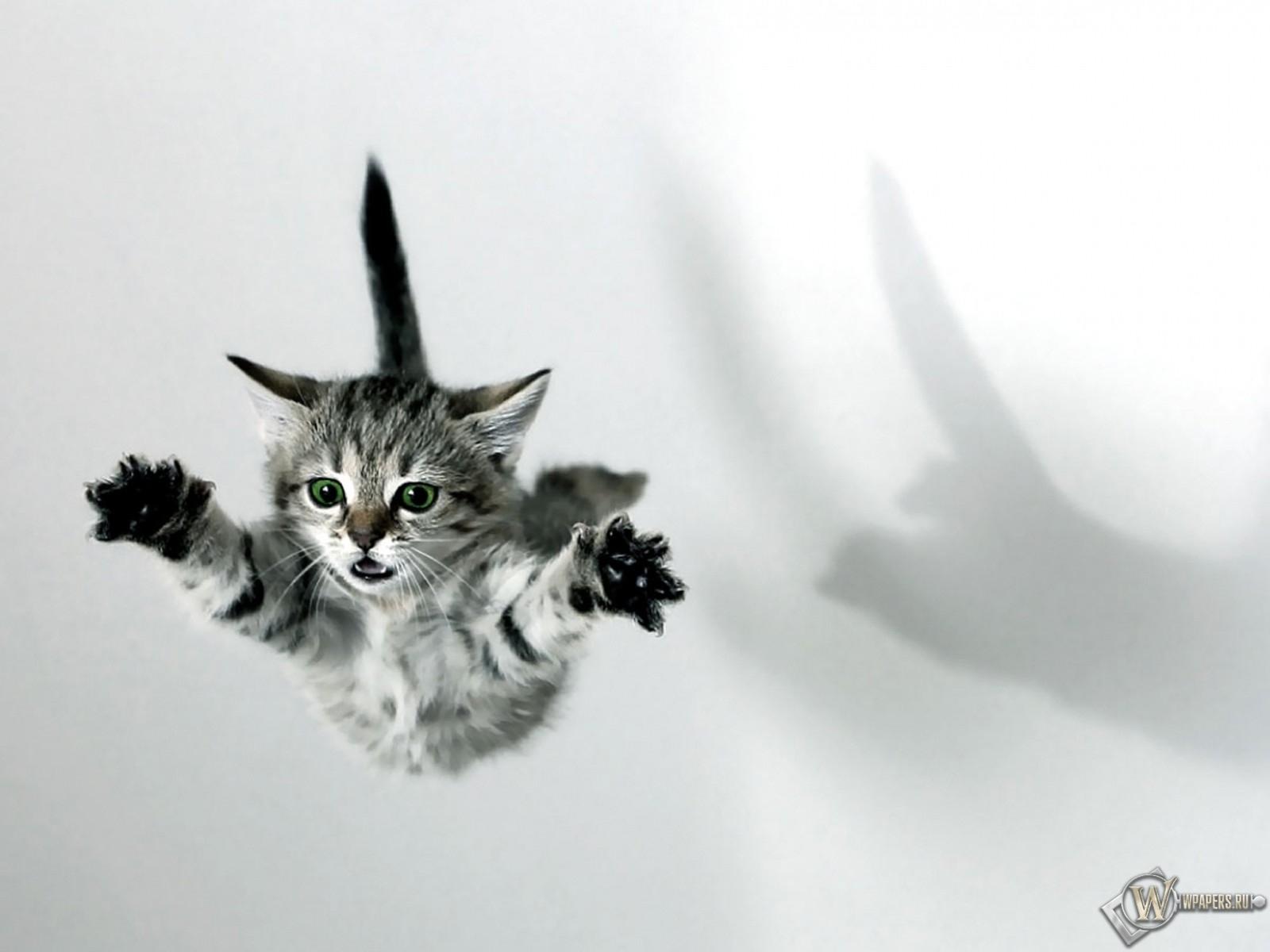 Котёнок в полёте 1600x1200