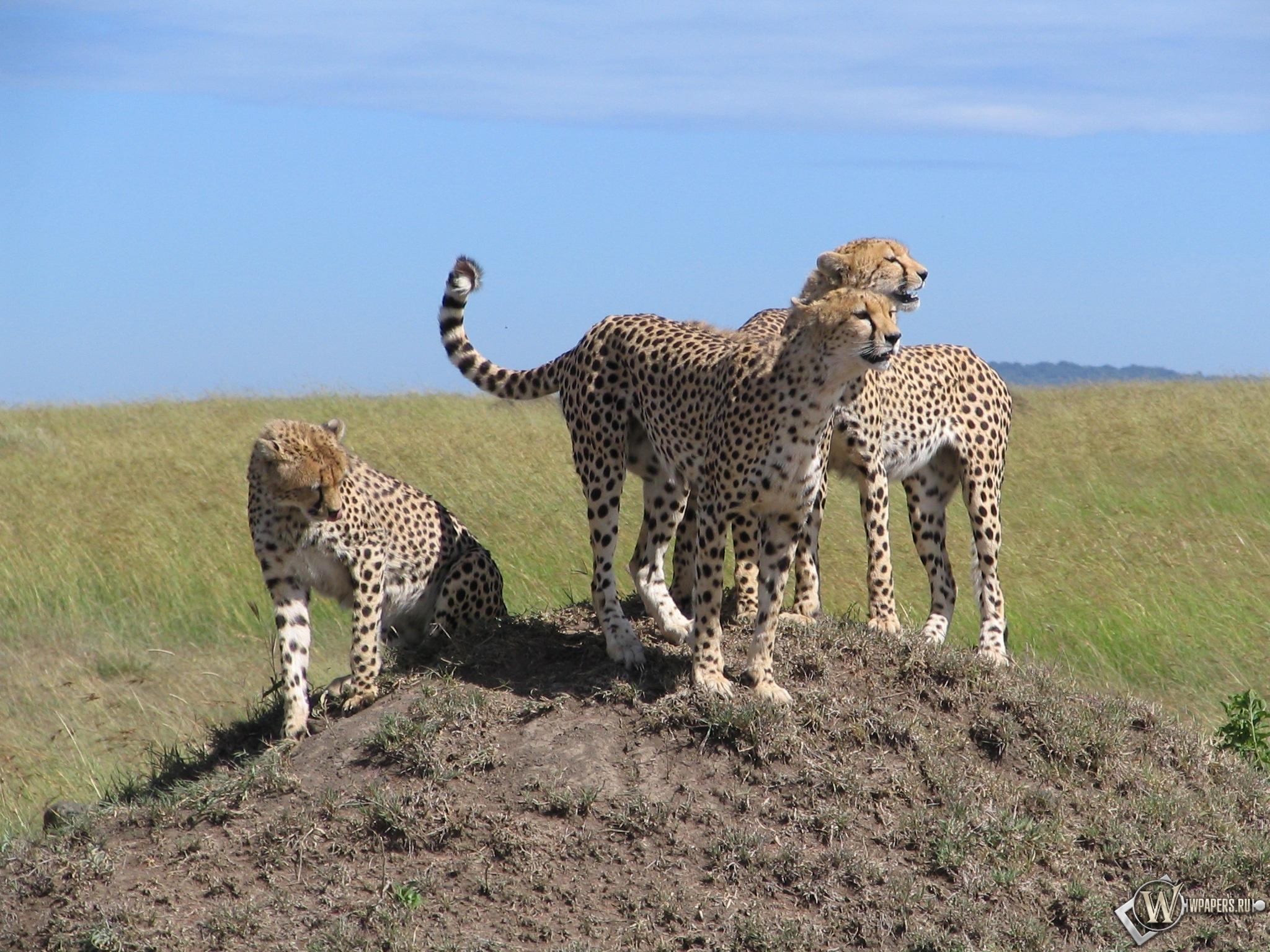 Kenya Safari 2048x1536