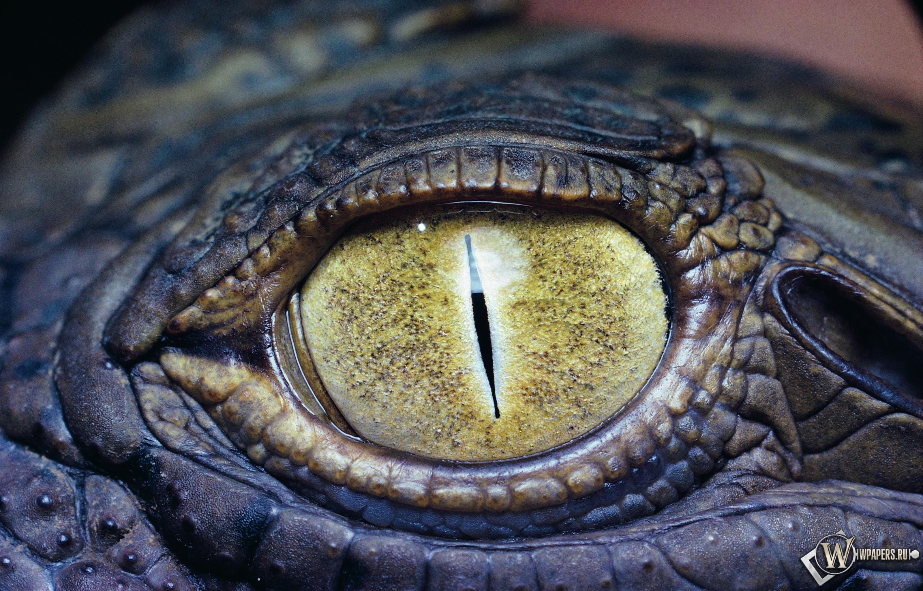 Глаз крокодила 3200x2048