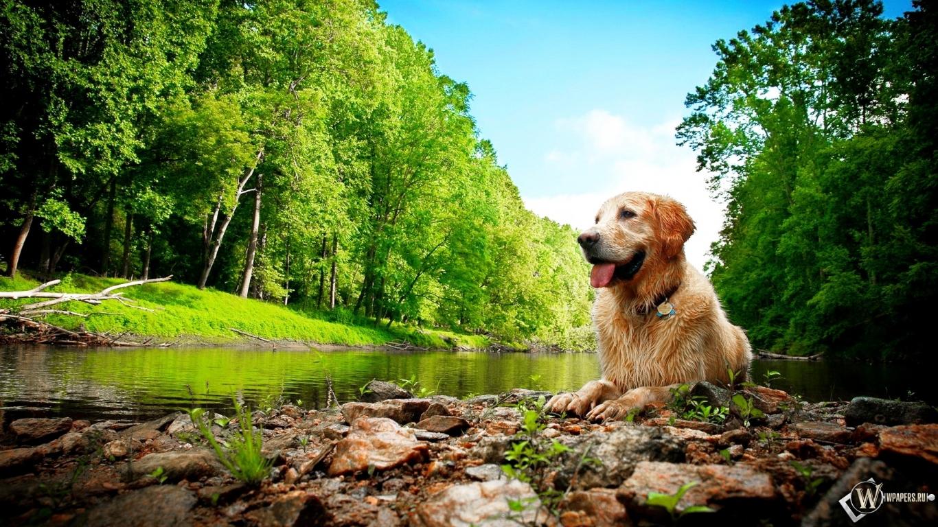 Природа красота собака 1366x768