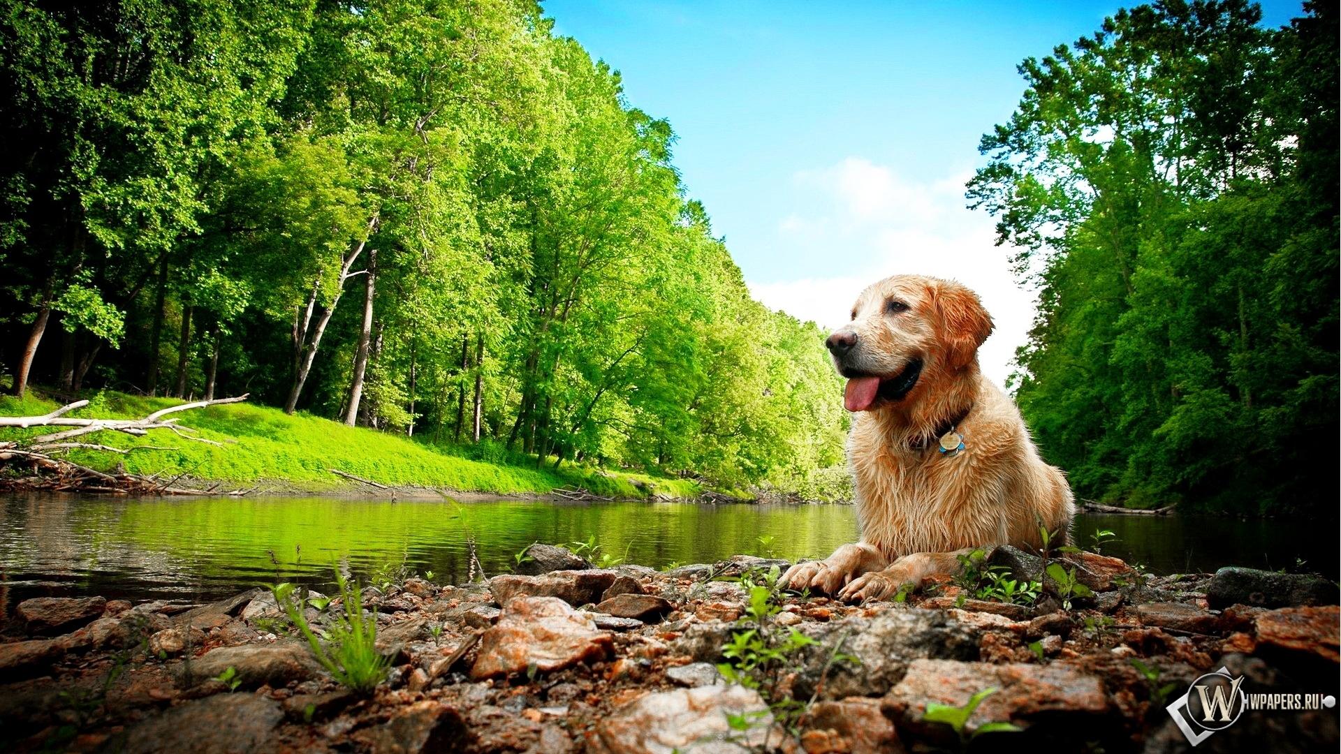 Природа красота собака 1920x1080