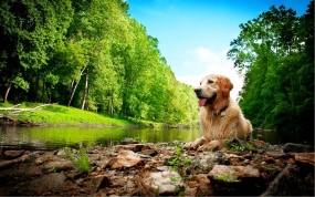 Обои Собака на природе: Природа, Красота, Собака, Собаки