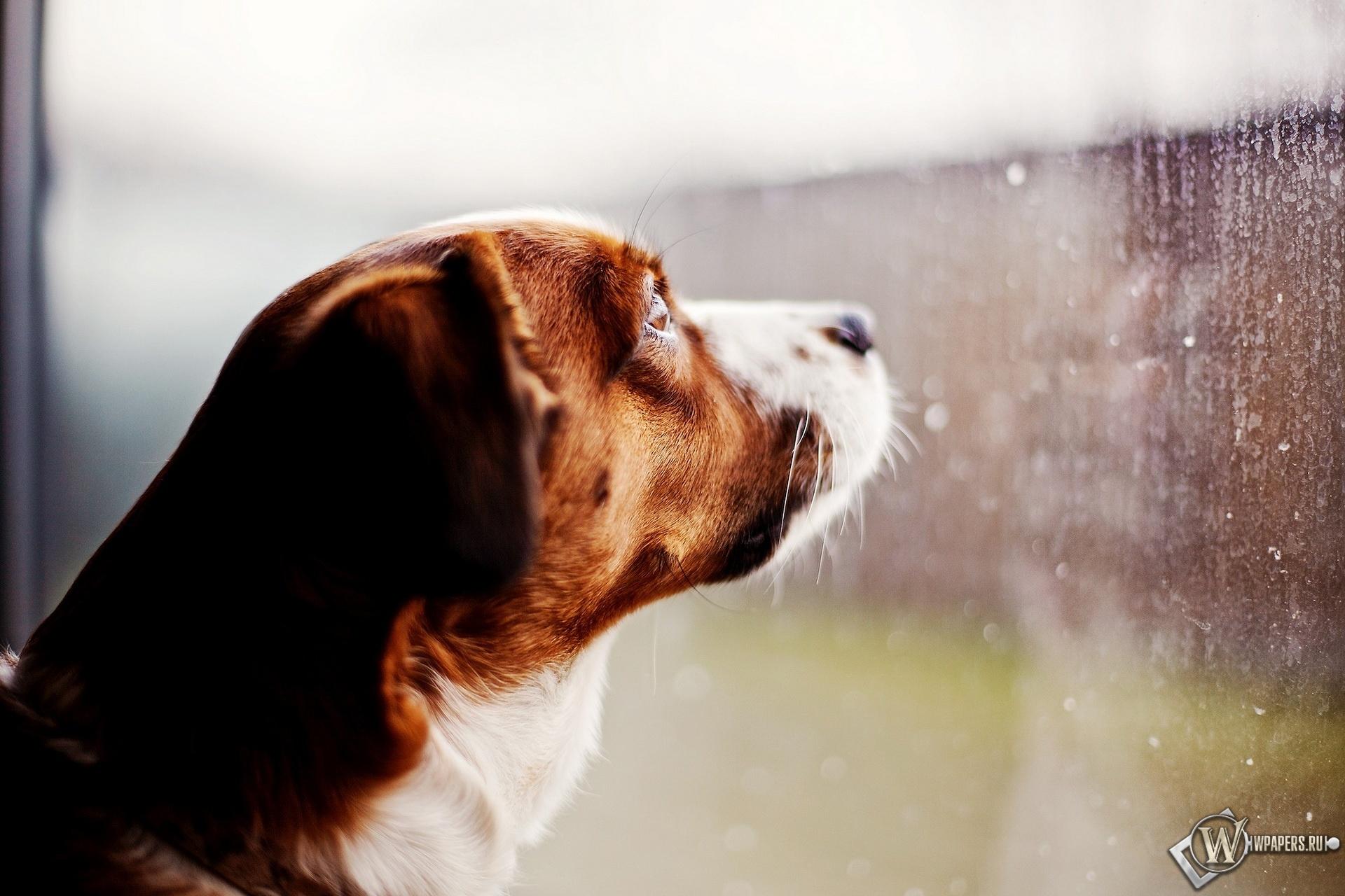 Собака ждет хозяина 1920x1280