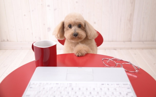Собака с ноутбуком