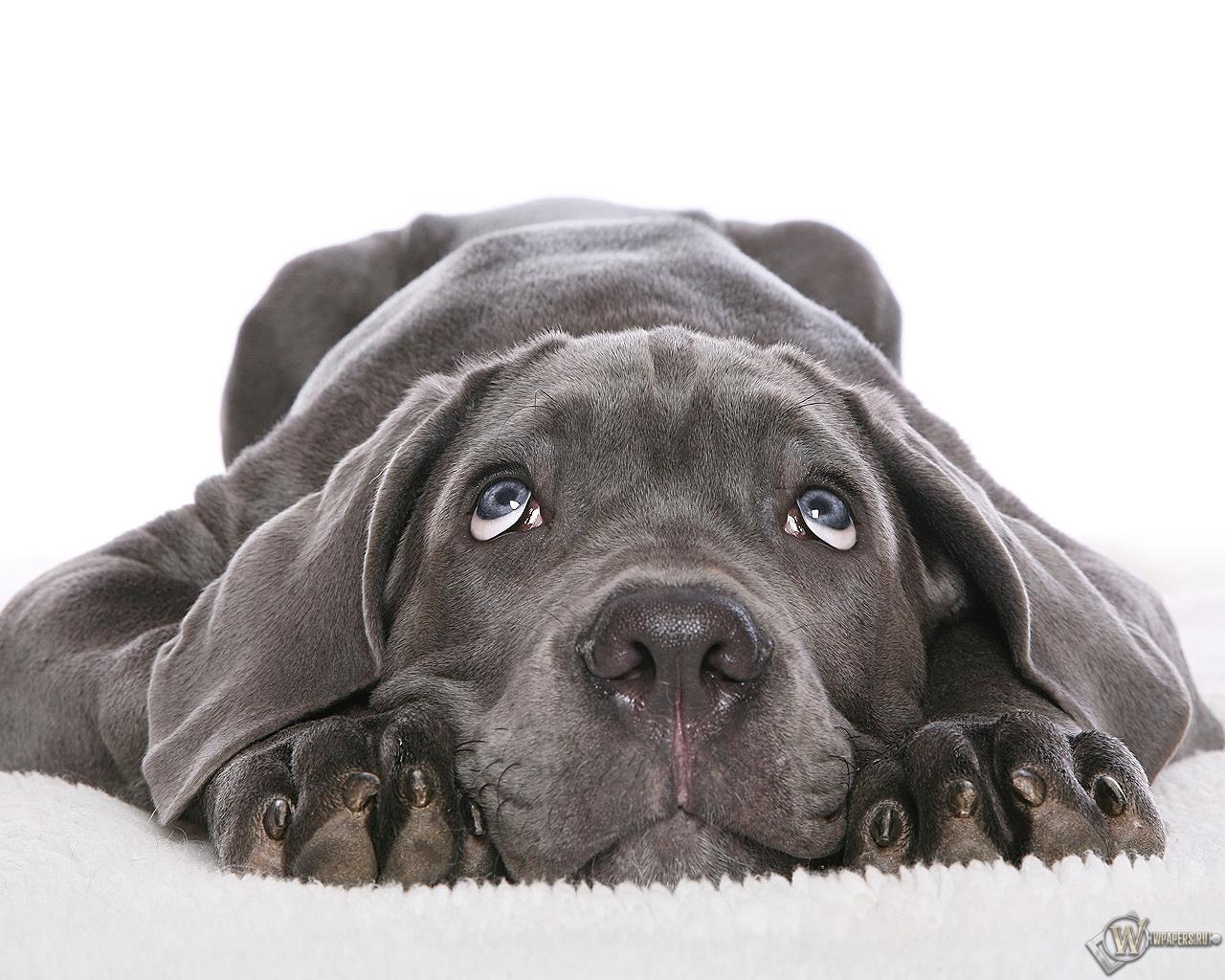 Собака в печали 1280x1024
