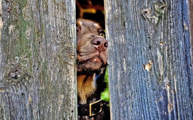Собака в печали