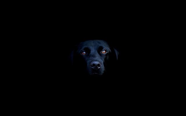 Чёрная собака