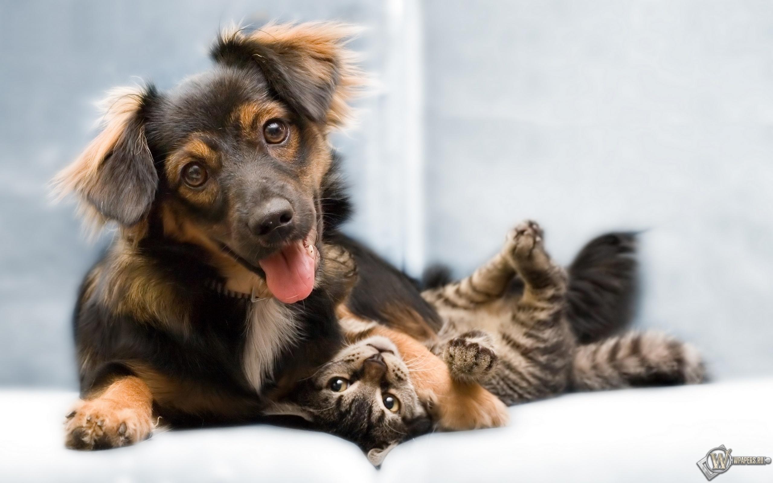 Собака и кошка 2560x1600