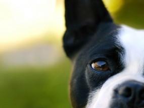 Обои Собака: Морда, Макро, Собака, Собаки