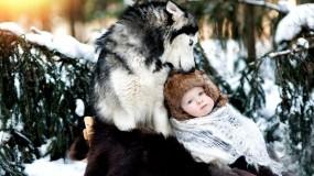 Обои Дружба: Хаски, Ребёнок, Собаки