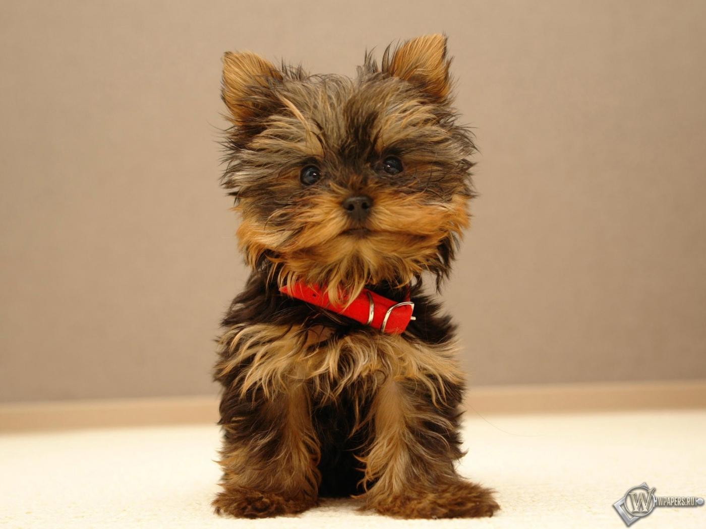 Портал собаководов в Москве Купить популярные породы собак