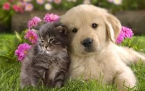 Обои Щенок с Котёнком: Трава, Щенок, Котёнок, Парочка, Малыши, Кошки