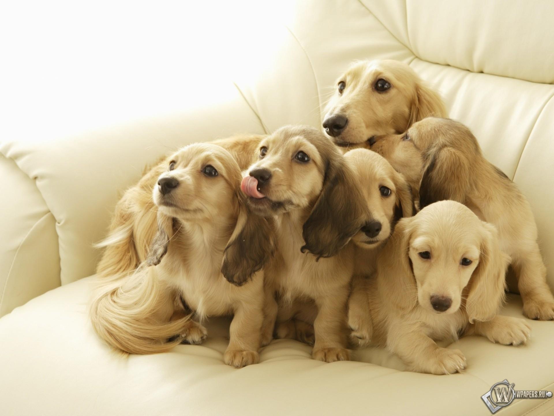 картинки на рабочий стол-собаки