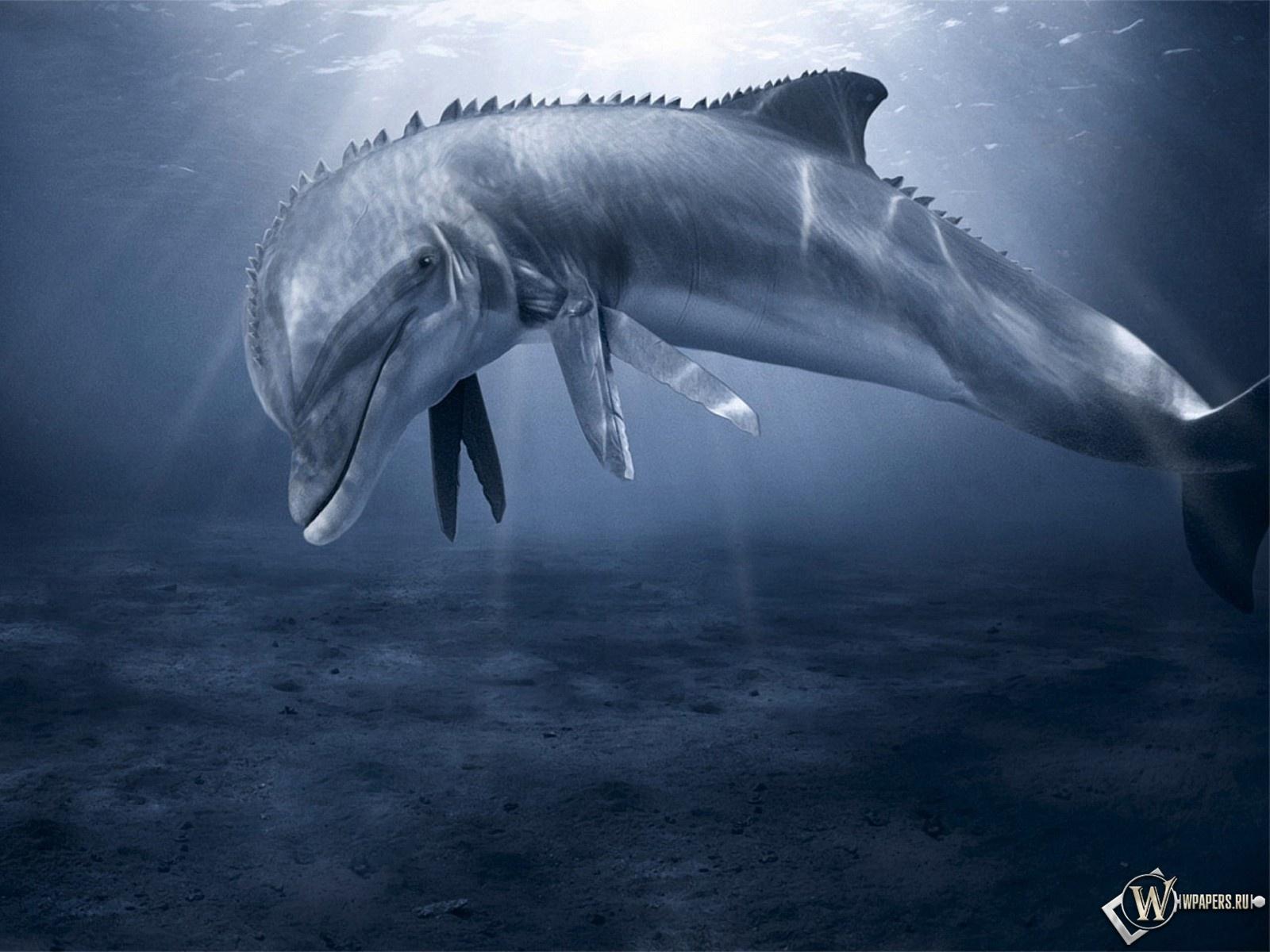 Дельфин-мутант 1600x1200