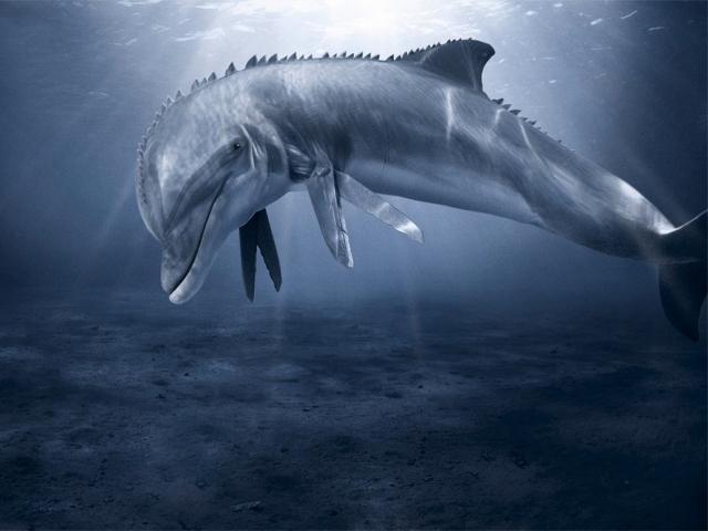 Дельфин-мутант