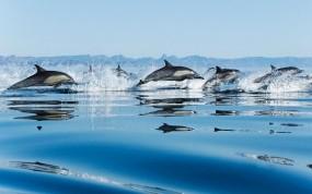 Обои Дельфины: Море, Капли, Брызги, Дельфины, Дельфины
