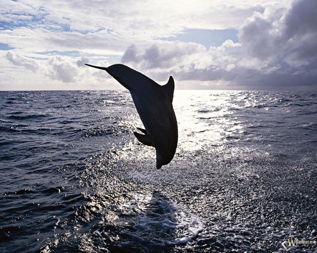 Прыжок дельфина 1280x1024