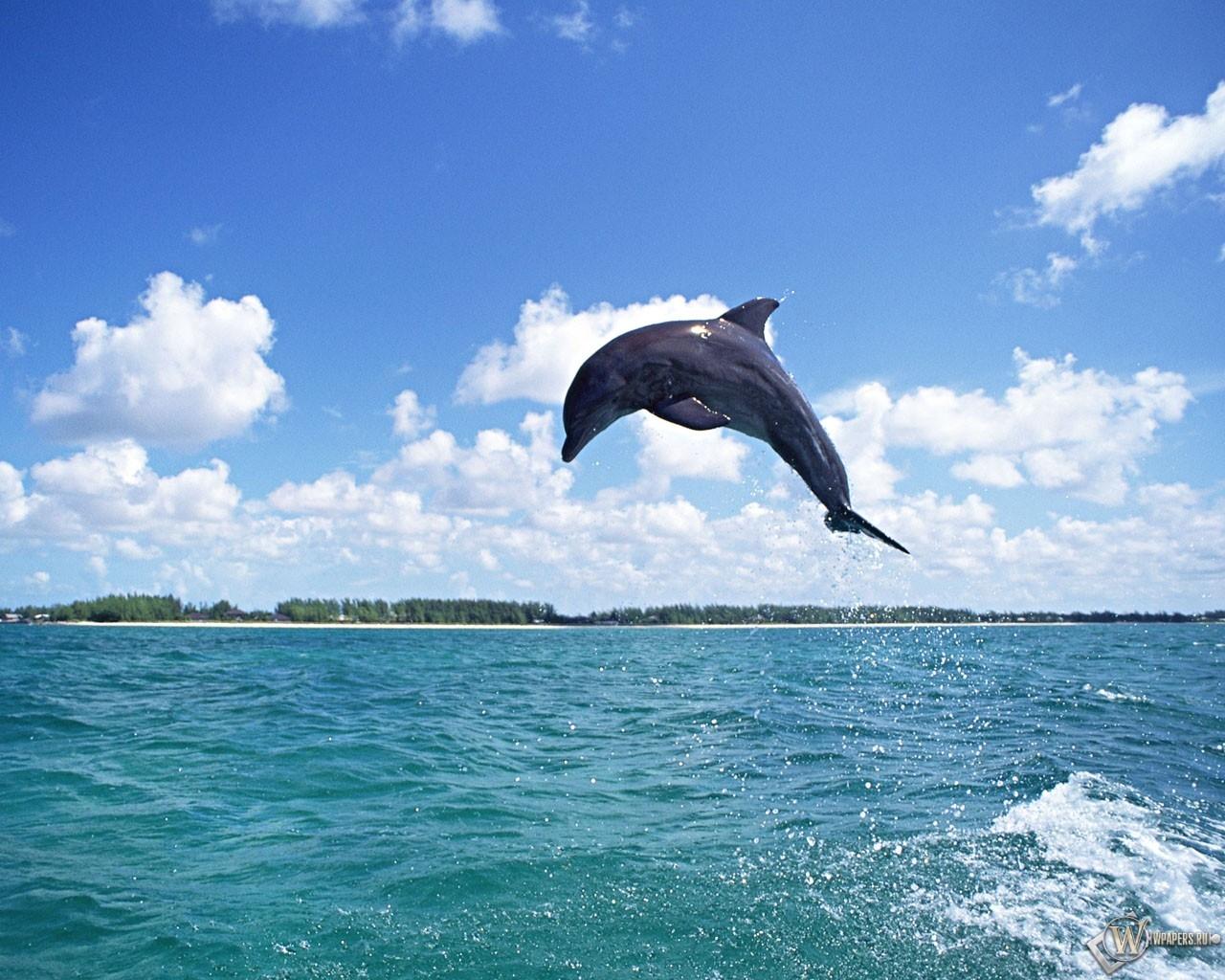 Обои дельфин в прыжке прыжок дельфин