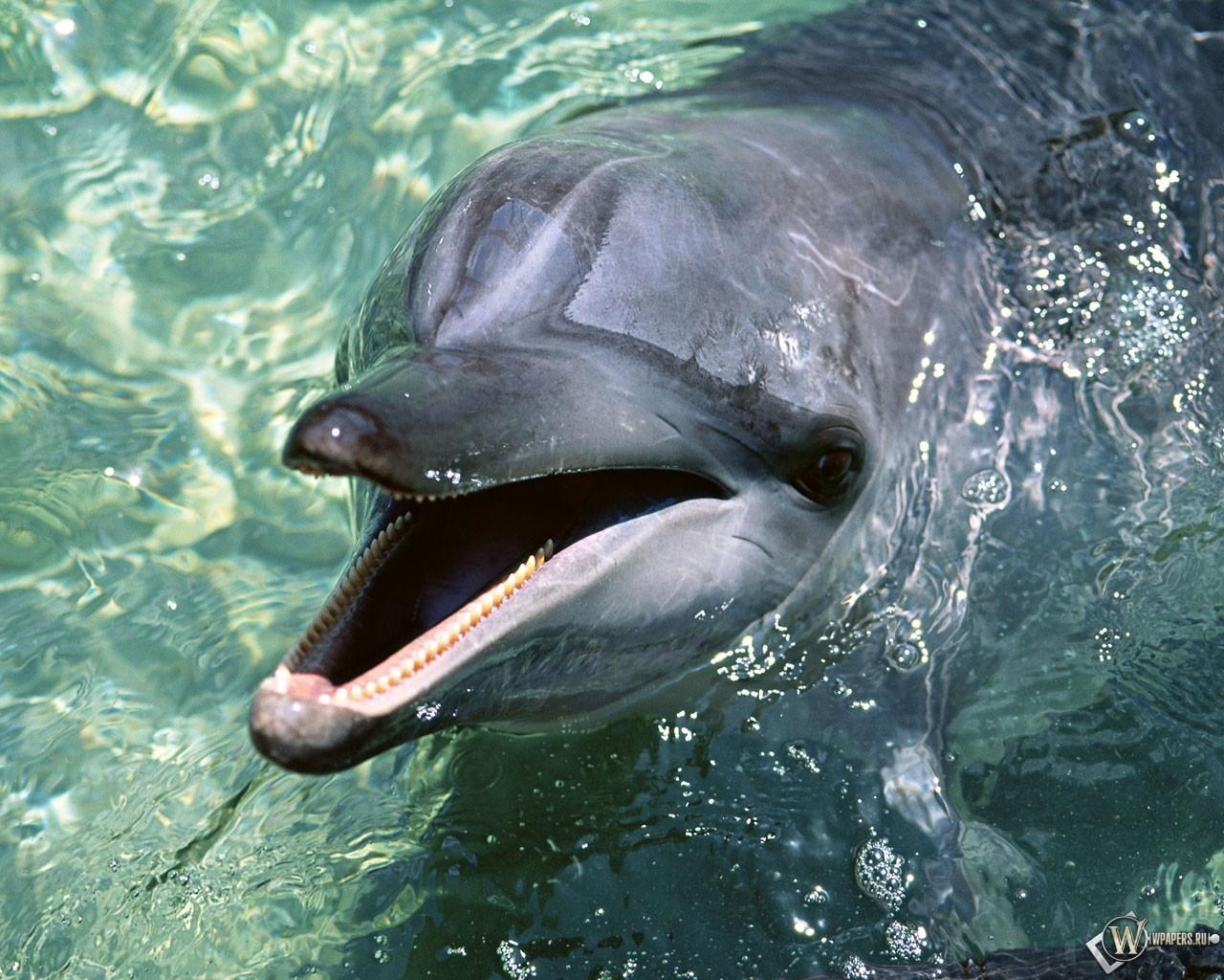 Дельфин 1280x1024